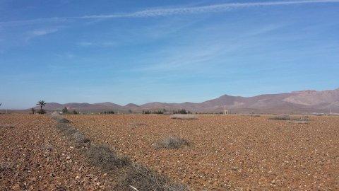 """للراغبين في الاستثمار في المغرب \""""أرض زراعية واعدة بمراكش\"""""""