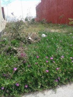 terrains de villa a nassime 2 sidi maarouf