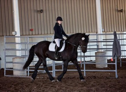 AMAZING AND ENERGETIC FRIESIANT HORSE FOR SALE..
