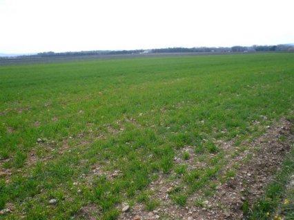 terrains a vendre de 200 hectar a berrechid