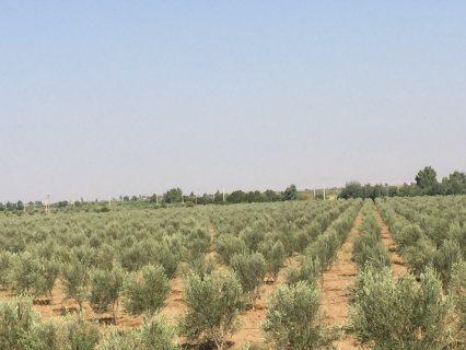 مزرعة للبيع /قلعة السراغنة