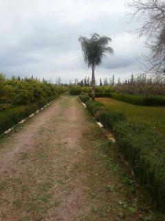 أرض 5 هكتار مع منزل صغير 12 كم في مراكش