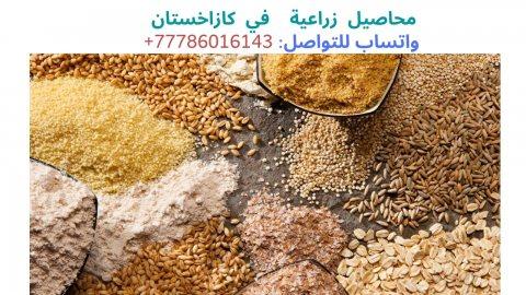 شركة كازاخستانية تبحث عن شركة عربية للتعاون، واتساب:  0077786016143
