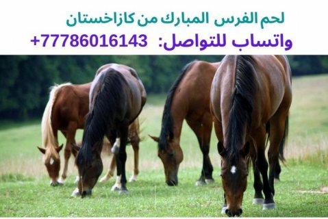 لحم الفرس من كازاخستان، واتساب للتواصل:  0077786016143