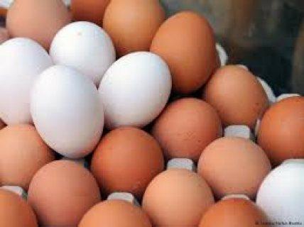 بيع البيض بالتقسيط والجملة بثمن جد مناسب التوصيل بالمجان