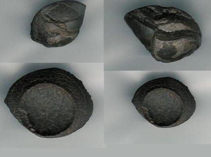أحجار نيزكية من المريخ
