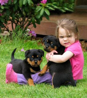 صور Gorgeous teacup rottweiler puppies for free adoption  1