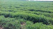 مزرعة للبيع بمدينة الجديدة