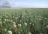 فلاح البذور و القطاني و التوابل